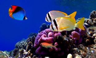 животные, морская фауна, рыбы, кораллы, актинии