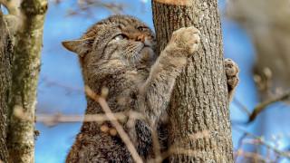 животные, дикие кошки, взгляд, ветки, дерево, на, дереве, дикая, кошка, лесной, кот