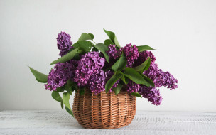 цветы, сирень, корзинка, букет