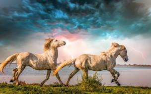 животные, лошади, гроза, тучи, река, молнии, кони, парочка