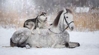 животные, разные вместе, дружба