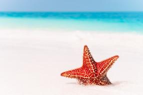 животные, морские звёзды, море, природа, берег, морская, звезда