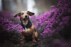 животные, собаки, щенок, собака, цветы, природа