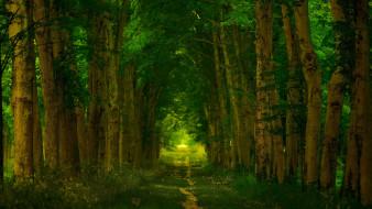 природа, лес, версаль, франция