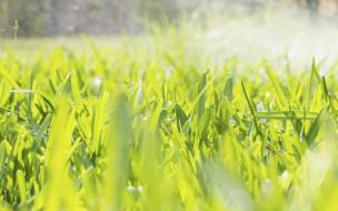 природа, макро, трава, фон