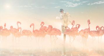 парень, фламинго