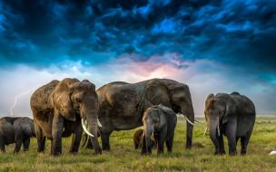 трава, тучи, молния, слоны, цапля, слонята