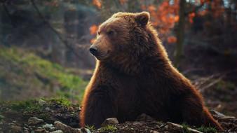 животные, медведи, бурый, медведь