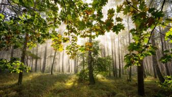 природа, лес, деревья, лучи, трава
