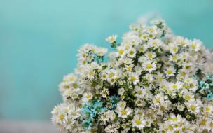 цветы, фон, ромашки, букет, белые