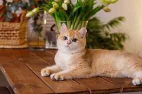животные, коты, кошка, взгляд, цветы, стол