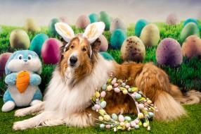 животные, собаки, праздник, собака, пасха, венок, яйца