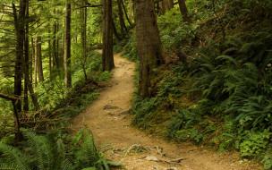 природа, лес, папоротник, тропинка