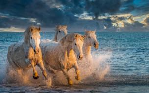 животные, лошади, море, брызги, кони