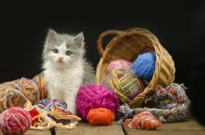 животные, коты, киса, корзина, нитки