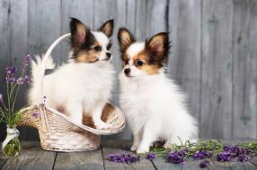 животные, собаки, щенки, корзина, цветы