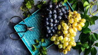 еда, виноград, ножницы, грозди, листья