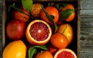 еда, цитрусы, мандарин, апельсин, грейпфрут