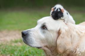 животные, разные вместе, собака, хомяк