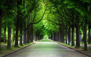 природа, парк, деревья, аллея