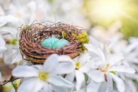 праздничные, пасха, яйца, малиновки, весна, природа, кизил