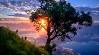 природа, деревья, дубна