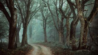 природа, лес, тёмный