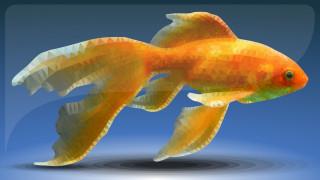 рыба, low poly, золотая рыбка