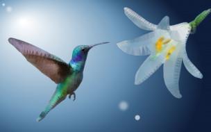 векторная графика, животные , animals, колибри, ave, цветок, low, poly, экзотические, оперение