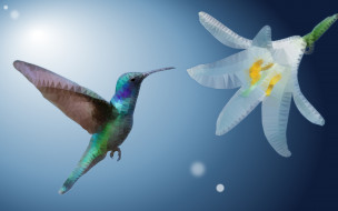 колибри, ave, цветок, low poly, экзотические, оперение
