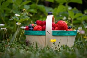 еда, фрукты,  ягоды, корзина, клубника, красный, малина, черника, природа