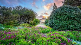природа, парк, клумбы, цветущие, кусты