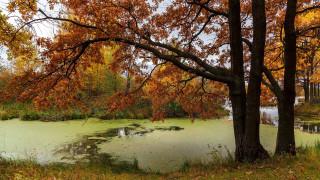 природа, парк, пруд, осень