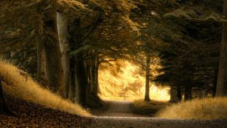 обои для рабочего стола 3840x2160 природа, лес, спуск, красота, деревья, дорога