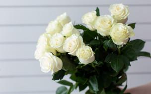 цветы, розы, букет