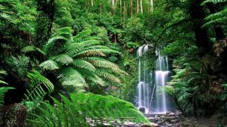 обои для рабочего стола 1920x1080 природа, водопады, поток, водопад, вода