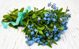 цветы, незабудки, синий
