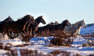 обои для рабочего стола 2060x1236 животные, лошади, табун, снег