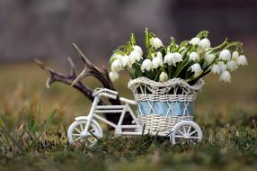 цветы, подснежники,  белоцветники,  пролески, белоцветник