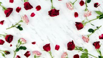 бутоны, розы, лепестки