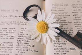 цветы, ромашки, ключ, старый, цветок, винтаж, ностальгический