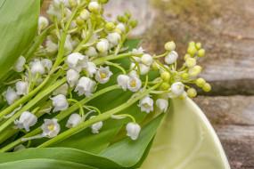 цветы, ландыши, ландыш, аромат, ароматный, сладкий, цветочные, открытки