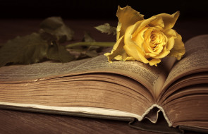 цветы, розы, цвести, книга, антиквариат, ностальгия