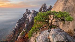 природа, деревья, гора, добонгсан, южная, корея