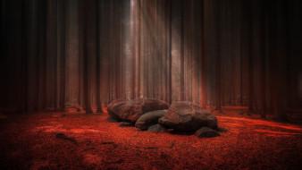 природа, лес, сосны, камни, листопад
