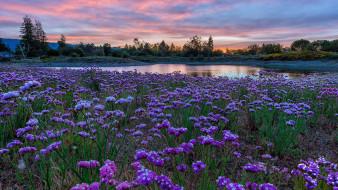 природа, луга, пруд, луг, цветы