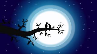 романтический, ночь, птицы, любовь, луна, пара, роман, мистические
