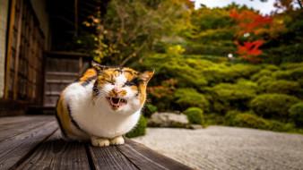 животные, коты, клыки, кошка