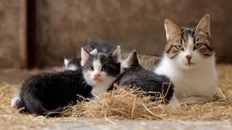 животные, коты, кошка, семья, малые, кошки, котенок