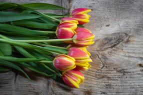 цветы, тюльпаны, букет, весна, природы